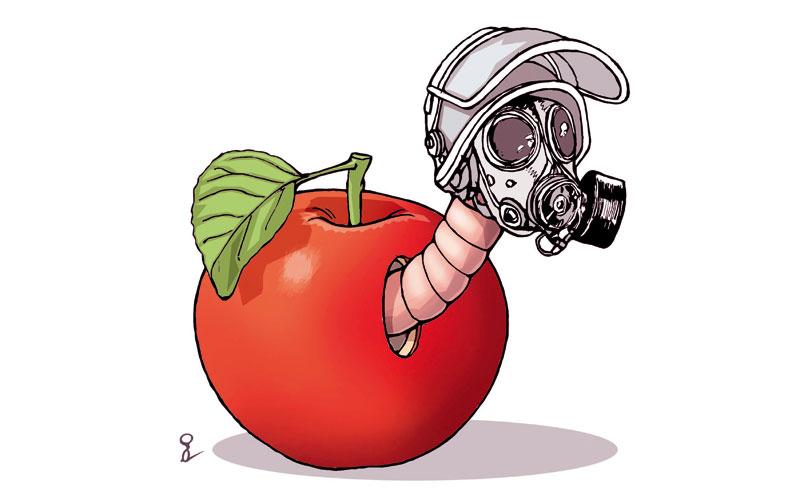 јабука са црвом