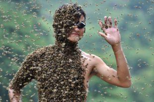 Кина - Такмичење пчелара