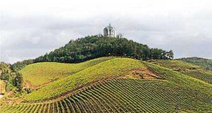 Профит у виноградима и производњи меда 5