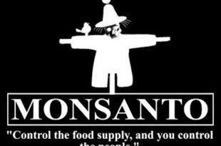 САД и ЕУ намеравају да у Србији легализују мутанте (ГМО)