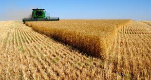 Сушна сетва – мршава жетва