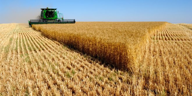 Сушна сетва – мршава жетва 1