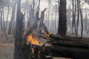 Паника на Сувобору: Села у обручу ватре (видео) 6