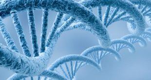 Тајанствени ланци ДНК који се уклапају са генима из других организама