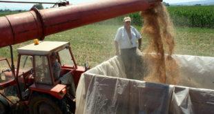 Најмање пшенице за последњих 60 година 6