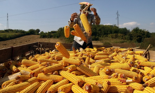 Кукуруз пада на берзи 1