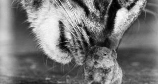 ММФ у игри мачке и миша 10