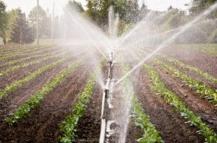 Србија: Све мање земљишта под системима за наводњавање