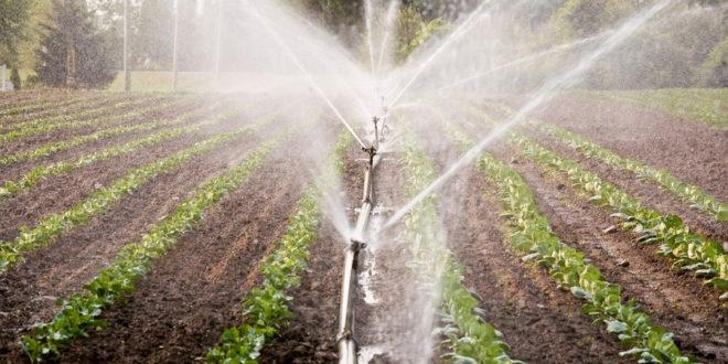 Због немара државе 24.000 хектара нема наводњавање