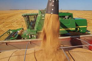 Србија увози 30.000 тона пшенице из Мађарске