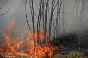 На Тари критично, пожар иде ка БиХ