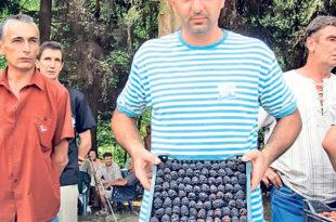 Цена купина у Левчу 30 динара, пет пута мања него лане