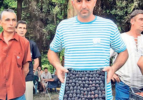 Цена купина у Левчу 30 динара, пет пута мања него лане 1