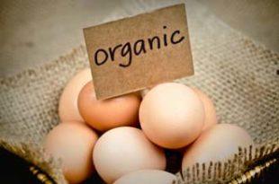 Фарма за производњу органских јаја