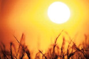 Од сутра петодневни топлотни талас у Србији