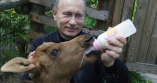Нападни Путина и звезда си Запада 1