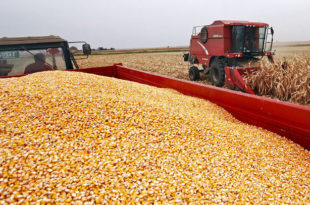 Пољопривредници незадовољни откупним ценама ратарских култура