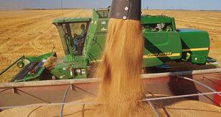Српски сељак и на пшеници губи
