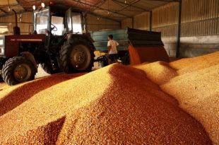 Кукуруз први на извозној листи