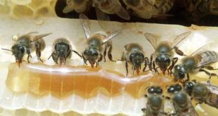 Пчелари траже подстицаје 8