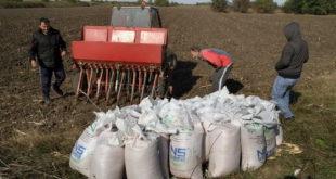 Сетва при крају, пшеница на 550.000 хектара 2
