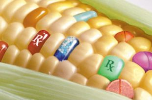 Србија ГМО тровачима: Сиктер!