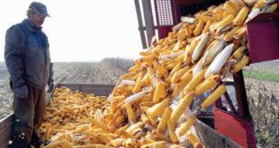 Цена кукуруза пала на најнижи ниво од 2016. године, цена соје је на најнижем нивоу од 2011. а цена сунцокрета најнижа од 2014.