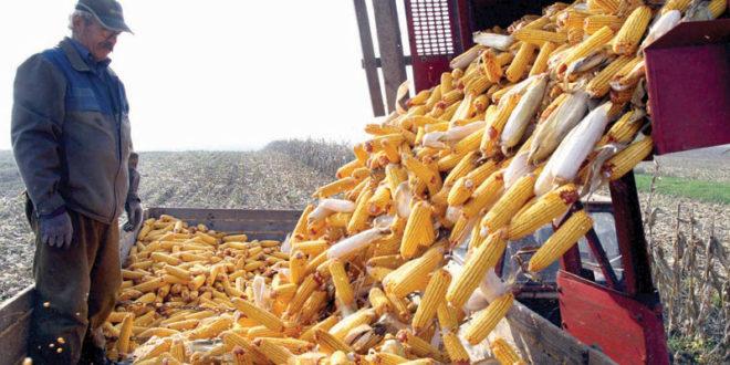 Цена кукуруза пала на најнижи ниво од 2016. године, цена соје је на најнижем нивоу од 2011. а цена сунцокрета најнижа од 2014. 1