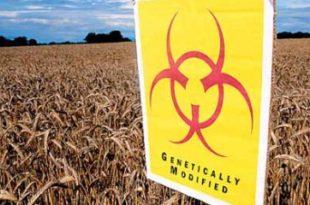 Србија током 2013. отвара врата за ГМО?