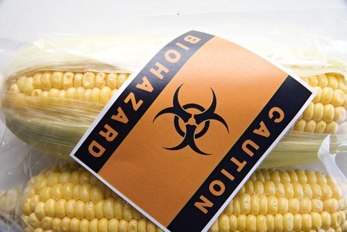 Ознака за ГМО на кукурузу