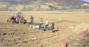 Србија саботира сопствени аграр 12