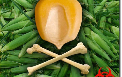 САД прете Србији због ГМО хране 1
