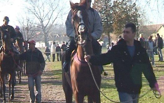 Новогодишње коњичке трке у Шапцу (видео) 1