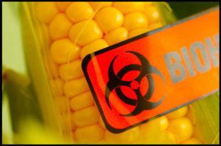 ГМО пред вратима Србије (2)