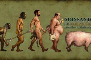Мекдоналдс: Без ГМО у Европи