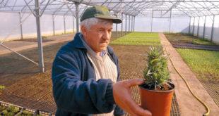 Нови Сад: Помоћ за производњу органске хране 7