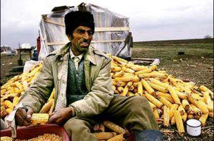 Заражен и кукуруз увезен из Румуније у Немачку