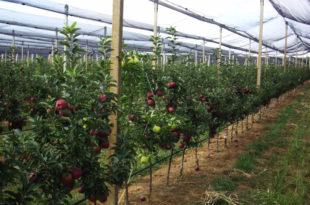Смањен извоз воћа из Србије