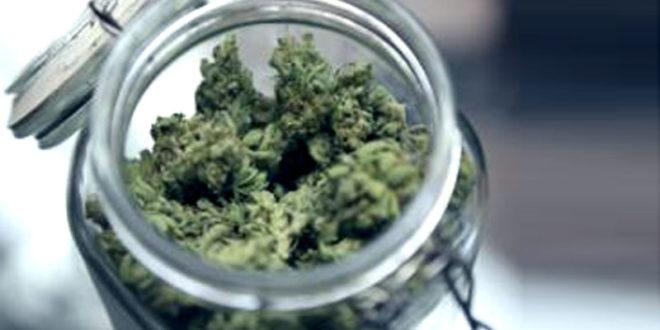 Посланик СНС-а блиски сарадник узгајивача марихуане!?