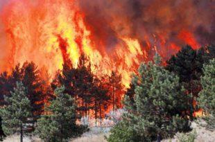 Црни Врх: Проширио се пожар, гори 150 хектара шуме