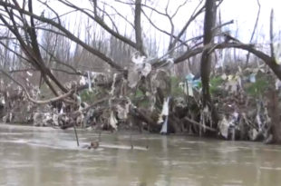 Јужна тужна Морава - плови само смеће (видео) 8