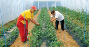 Двоцифрени раст европског тржишта органских производа