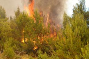 Прибој: Пожар се отео контроли