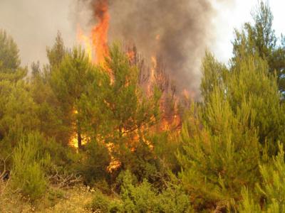Прибој: Пожар се отео контроли 1
