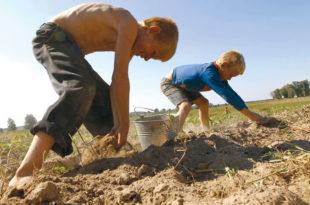 Деца у Србији због беде раде као кућни робови и слуге