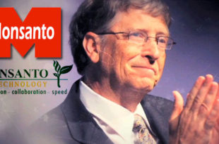 ГМО храна (2): Убице и Гејтс у служби Монсанта