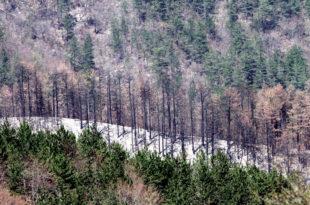 Шуме на Тари убија суша