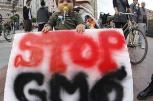 Србија без ГМО: Позивамо Томислава Николићa да не потпише закон о ГМО