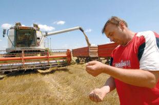 Очекује се род пшенице од 2,35 милиона тона