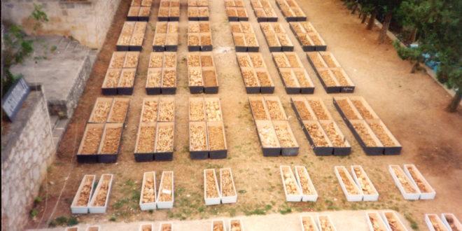 ПРЕБИЛОВЦИ – крв српских мученика као монета за поткусуривање екуменистичке секте
